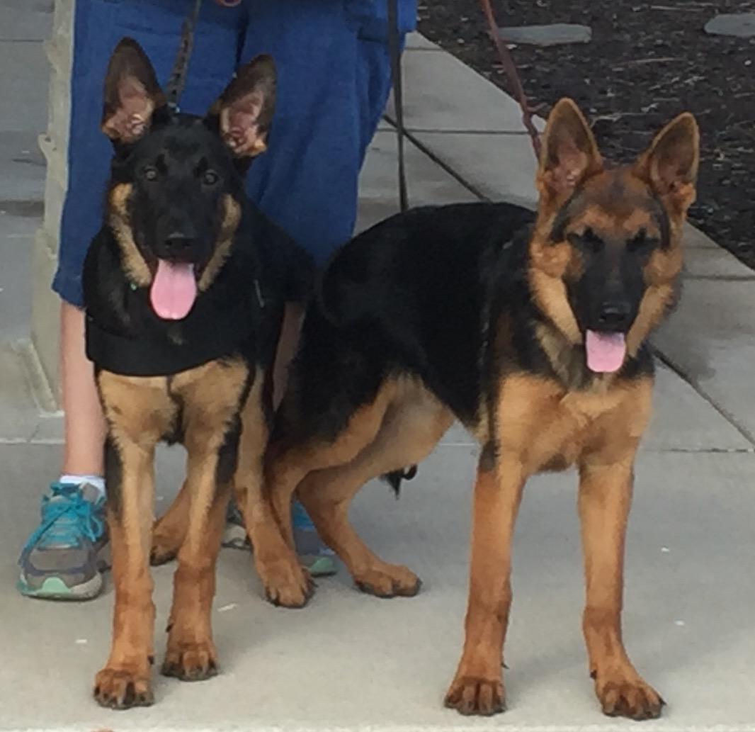 Nico and Bentley